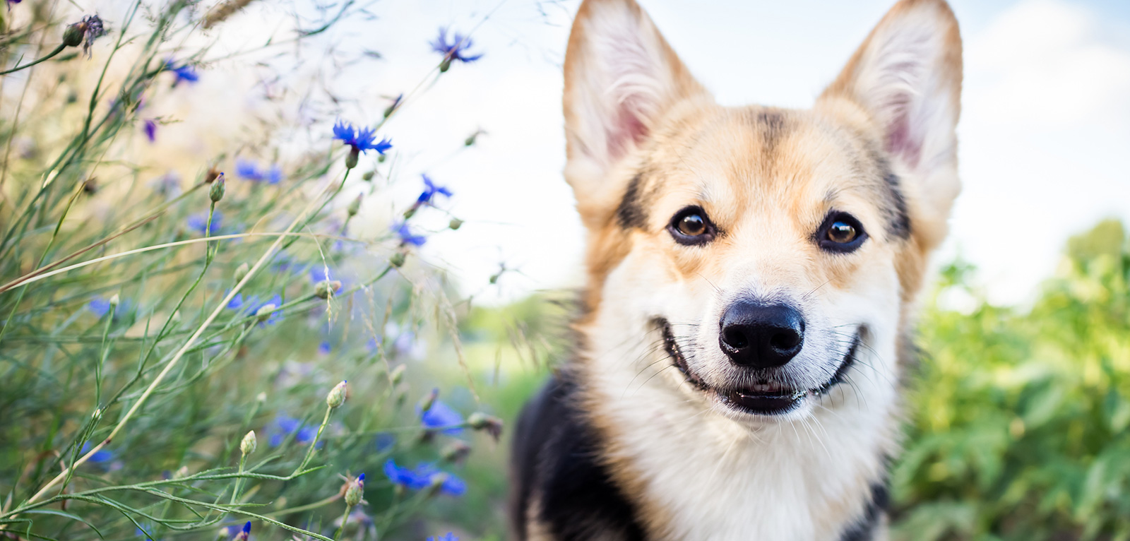 New Blog Post: 7 Feel-Good Animal Stories to Brighten Your Day